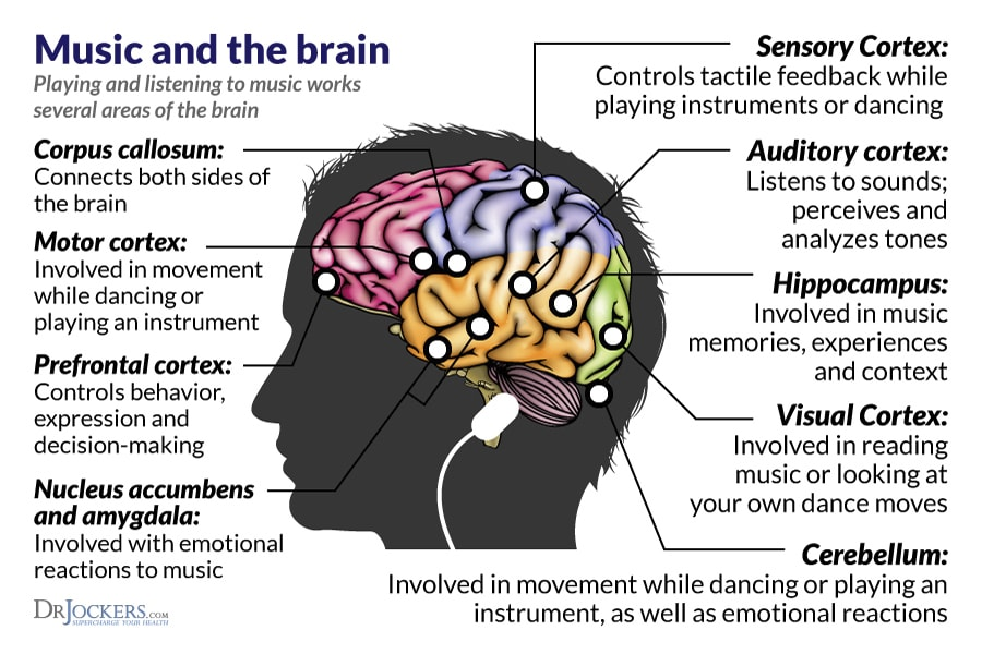 Music and the Brain. Listen Closely.